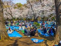 Tokyo, Japon - 24 août 2017 : Foule des personnes appréciant le festival de fleurs de cerisier en parc d'Ueno Photo libre de droits