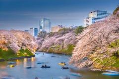 Tokyo, Japon au fossé impérial de palais de Chidorigafuchi images libres de droits