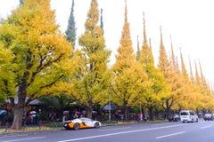 TOKYO, JAPON - 19 NOVEMBRE 2016 Icho Namiki/avenue de Ginkgo, Mei Photo libre de droits