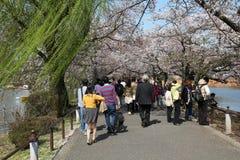 Tokyo körsbärsröd blomning Arkivfoton
