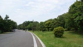 Tokyo Kasai Rinkai parkerar naturligt beskydd Royaltyfri Fotografi