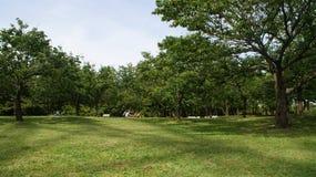 Tokyo Kasai Rinkai parkerar naturligt beskydd Arkivbilder