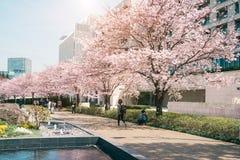 TOKYO MIDTOWN, JAPAN - APRIL 1ST: Oidentifierade turister tycker om th Royaltyfria Foton