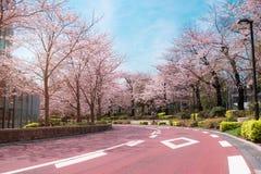 TOKYO MIDTOWN, JAPAN - APRIL 1ST: Vårsakura körsbärsröda blomningar Royaltyfri Bild