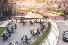 TOKYO MIDTOWN, JAPAN - APRIL 1ST: Vårsakura körsbärsröda blomningar Arkivfoto