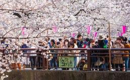 Tokyo nella stagione di Sakura Immagine Stock