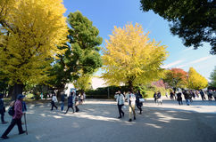 TOKYO - NOVEMBER 22: Visitors enjoy colorful trees on November22 Royalty Free Stock Photography