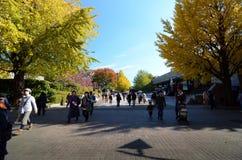 TOKYO - 22 NOVEMBRE: Gli ospiti godono degli alberi variopinti Fotografia Stock