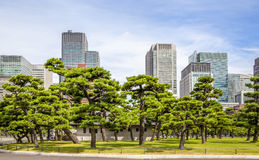 Tokyo Palace Garden Royalty Free Stock Photography