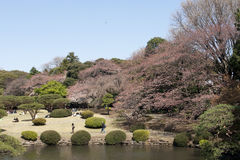 Tokyo park during hanami Royalty Free Stock Photography