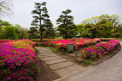 Tokyo. The Park of the Imperial Palace. Around the residence, the Imperial Palace lies a huge Park - Eastern Park of the Imperial residence royalty free stock photography