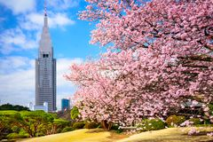 Tokyo Park in the Spring Royalty Free Stock Photography
