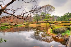 Tokyo park. View for lake in Tokyo park in springtime Royalty Free Stock Photo
