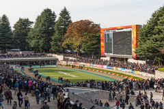 Tokyo Racecourse in Japan. General view the paddock of Tokyo Racecourse. It is located in Fuchu, Tokyo, Japan. Tokyo Racecourse hosts numerous G1 Grade 1 races Stock Photos