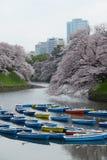 Tokyo Sakura image libre de droits