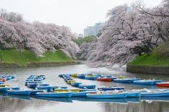 tokyo sakura Stock Photography
