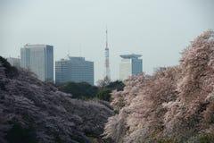 tokyo sakura Stock Image