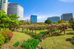 Tokyo sakura spring Stock Images