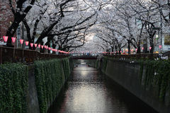 Tokyo sakura Stock Photo