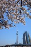 Tokyo sky tree and cherry blossom Royalty Free Stock Photo