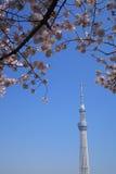 Tokyo sky tree and cherry blossom Stock Photo