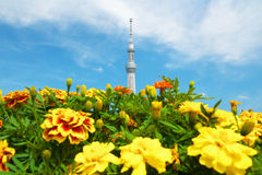 Tokyo Sky Tree and marigolds Royalty Free Stock Image