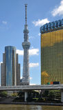 Tokyo Sky tree. And office building skyline, Tokyo, japan. Tallest radio tower in Japan Stock Image