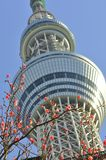 Tokyo sky tree tower in sumida ward, tokyo, japan. The picture focus on Sakura flower in front of the Tokyo Sky Tree tower. The Tokyo Sky Tree Tower is going to Stock Images