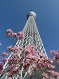 Tokyo skytree and cherry blossom Royalty Free Stock Photo