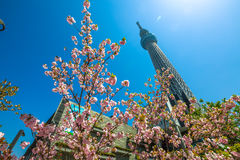 Tokyo Skytree with cherry blossoms Stock Photography