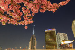 Tokyo skytree at night and cherry blossom in Tokyo stock images