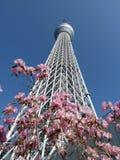 Tokyo skytree och körsbärsröd blomning Royaltyfri Foto