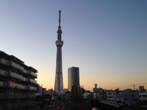 Tokyo Skytree på skymning Arkivfoton