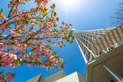 Tokyo Skytree sakura Stock Image