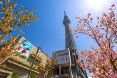 Tokyo Skytree Sakura Royalty Free Stock Photos