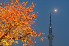 Tokyo Skytree Tower with cherry blossoms in full bloom at Sumida Park. royalty free stock photography