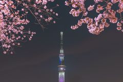 Tokyo Skytree Tower with cherry blossoms in full bloom at Sumida Park. stock images