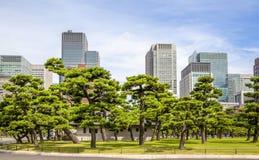 Tokyo slottträdgård Royaltyfri Fotografi