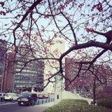 Tokyo takebashiområde Royaltyfri Foto