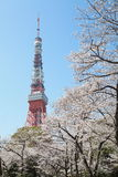 Tokyo Tower at cherry blossom time Royalty Free Stock Photo