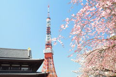 Tokyo Tower at cherry blossom time Royalty Free Stock Images