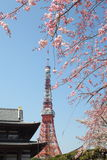 Tokyo Tower at cherry blossom time Stock Photography