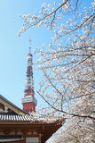 Tokyo Tower at cherry blossom time Stock Photo
