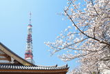 Tokyo Tower at cherry blossom time Stock Images