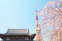 Tokyo Tower at cherry blossom time Stock Image