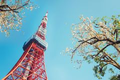 Tokyo Tower with cherry blossom trees Royalty Free Stock Photography