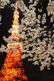Tokyo tower with cherry blossoms Royalty Free Stock Photos