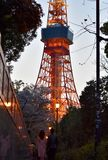 Tokyo tower night view tourism outdoor cherry blossom season. Tokyo tower Sakura night light temple japan couple stock image