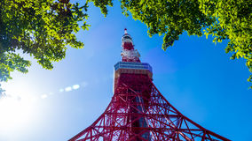 Tokyo tower in summer and a green tree on May 13,2016 in Tokyo,J Stock Images