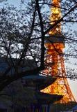 Tokyo tower and temple view. Tokyo tower Sakura night light temple japan royalty free stock photos